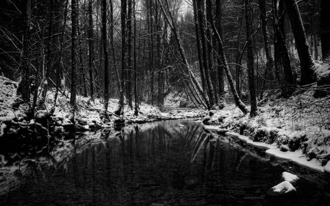 winterblackforest